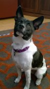 Photo of Cyra B.'s dog