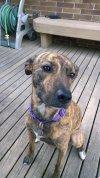 Photo of Kim V.'s dog