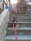 Photo of Josh W.'s dog
