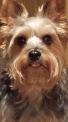 Photo of Rhonda R.'s dog