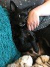 Photo of Bayu A.'s dog
