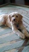 Photo of Anja F.'s dog