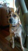 Photo of Megan T.'s dog