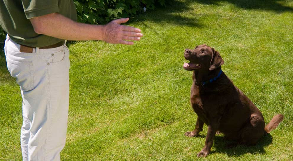 Bark Busters dog training in your home to solve your dog's behavioural problems