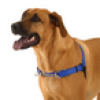 WaggWalker® Lets You Take the Lead in Walking Your Dog