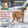 Protecting Your Dog Against the Winter Blues