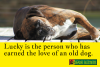 An Old Dog Can Bring You New Life