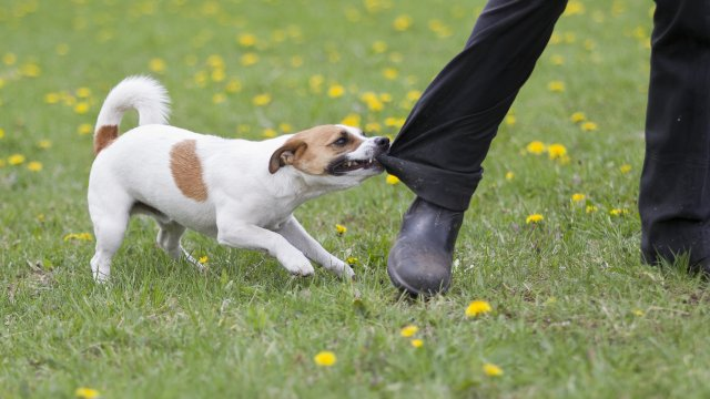 What You Should Know About Dog Bite Prevention