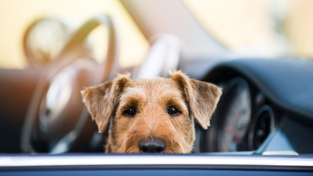 Are You Sure Your Dog is Actually Carsick?