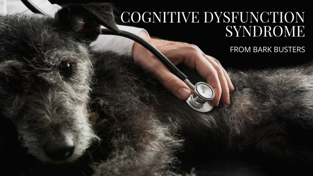 Cognitive Dysfunction Syndrome (CDS)