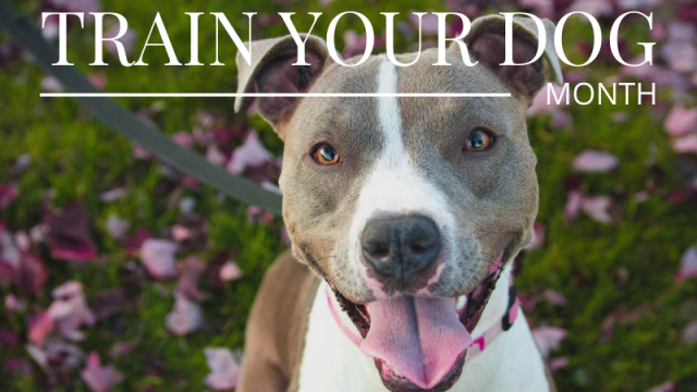 January is National Train Your Dog Month!