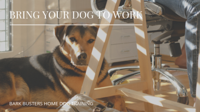 Tips on Bringing Your Dog to Work