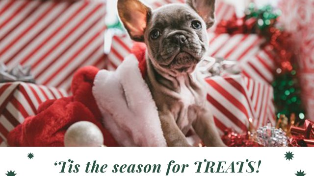 Great Holiday Stocking Stuffers For Your Dog
