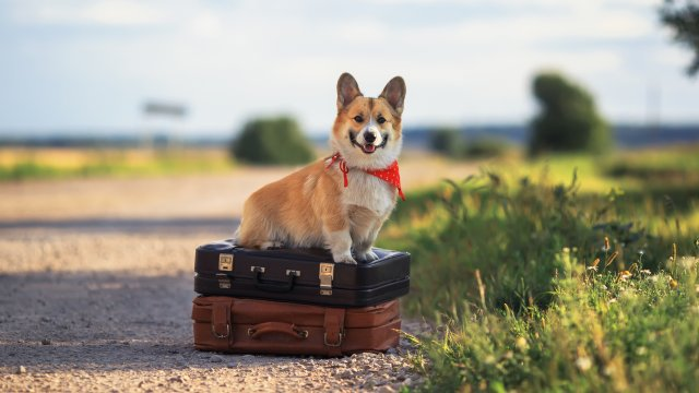 Tips for Holiday Travel with Your Dog