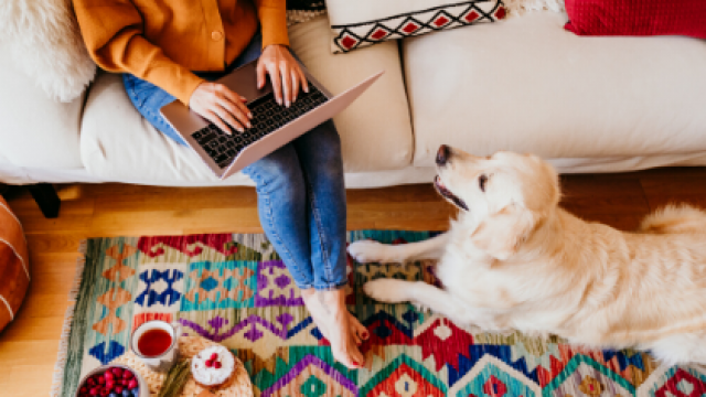 Working From Home With Your Dog?