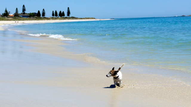 How to Have a Fun and Safe Summer with Your Dog