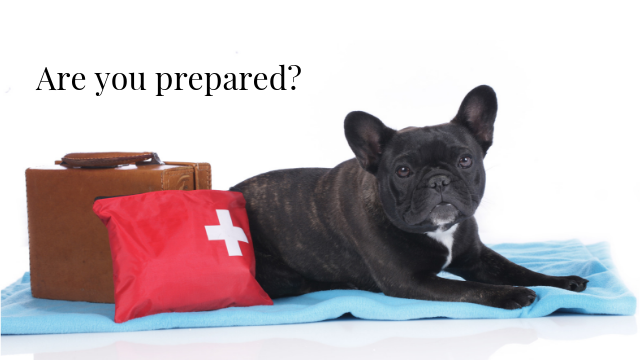 Are You Prepared to Help Your Pets?