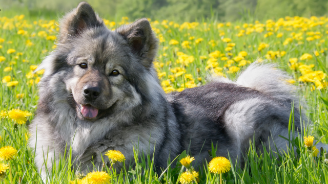 Spring Tips For A Happy & Healthy Dog