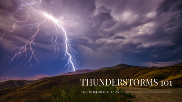 Summer Thunderstorms