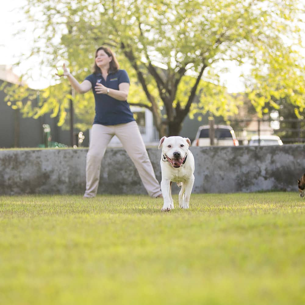 Our dog training is simple, natural, and fast