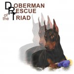 Doberman Rescue of the Triad